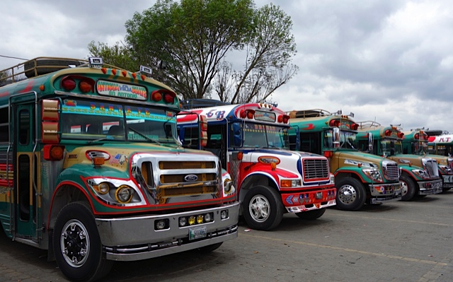 Chicken Buses lined up ready for customers