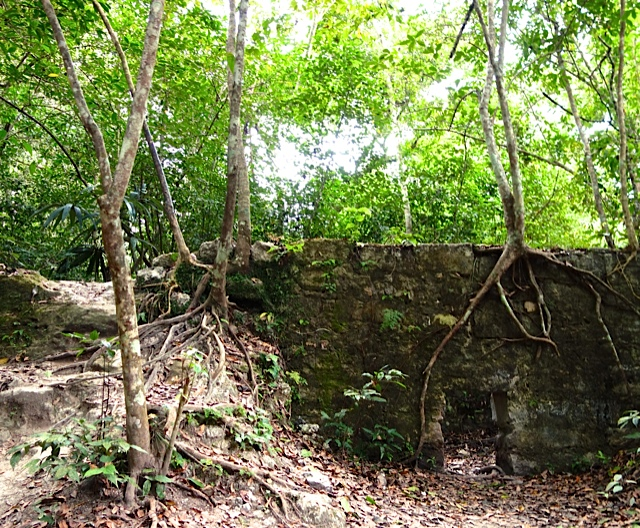 An obscure structure with the jungle reclaiming it