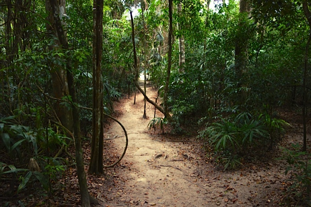 A typical trail at Tikal through the jungle and beneath the towering canopy