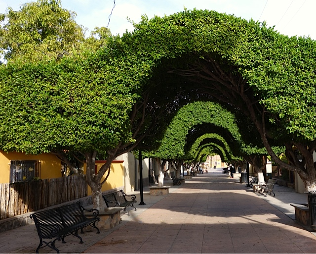 Loreto's main pedestrian street lined with beautifully sculpted trees