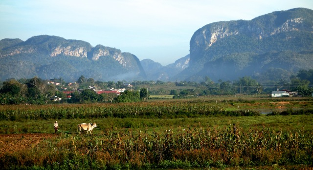 tobacco and corn and the karst formations beyond