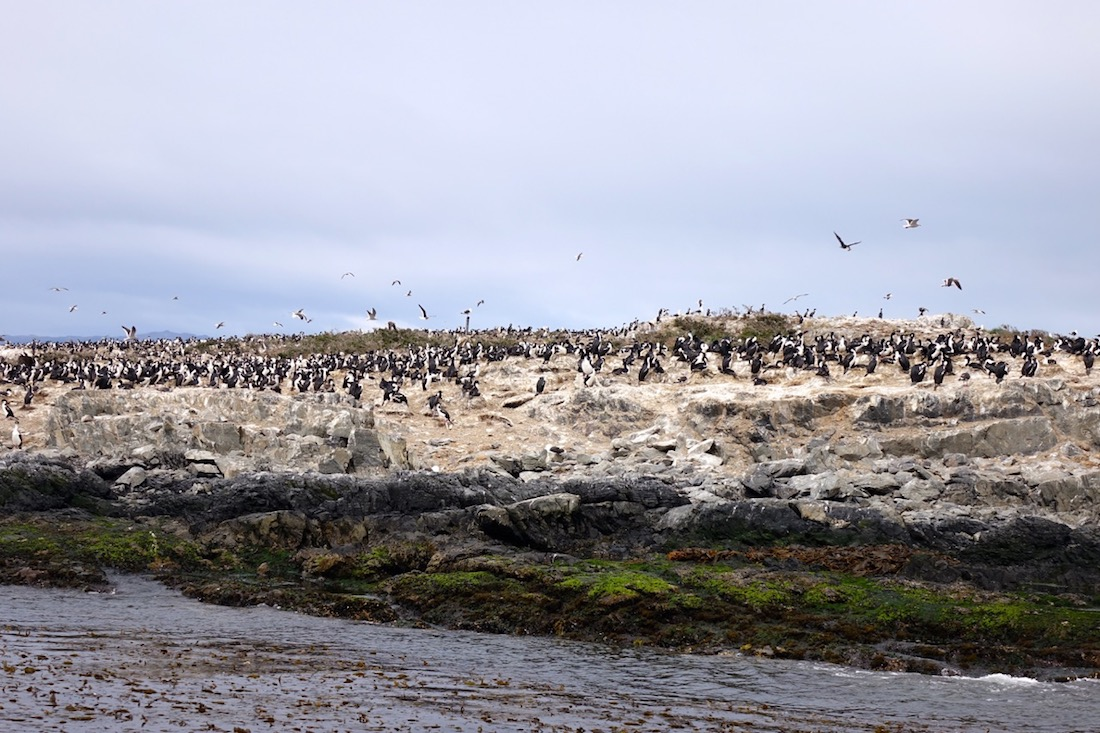 Beagle Channel, Cormorants, Sea-Lions, Ushuaaia, Argentina_3