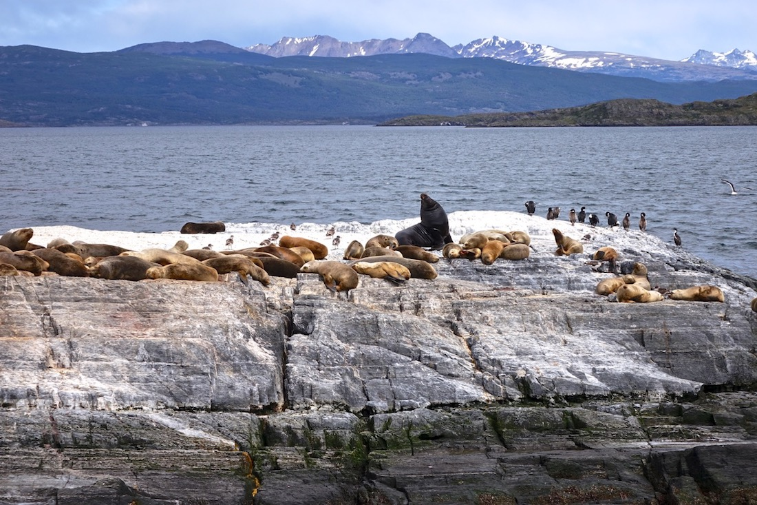Beagle Channel, Cormorants, Sea-Lions, Ushuaaia, Argentina_6